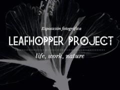 "Exposición "" Leafhopper Project """